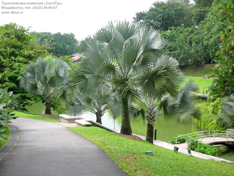 Сингапур, Ботанический сад