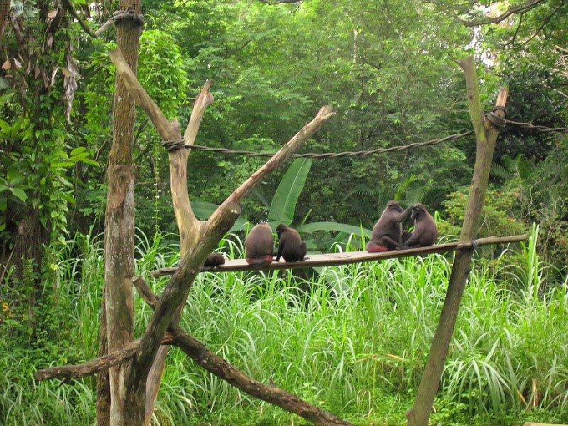 Сингапур, Зоопарк