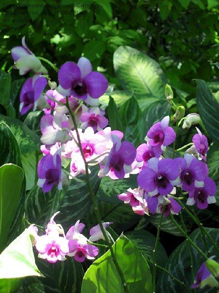 Сингапур, Сад орхидей