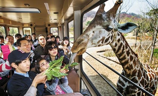 Картинки по запросу сеул зоопарк