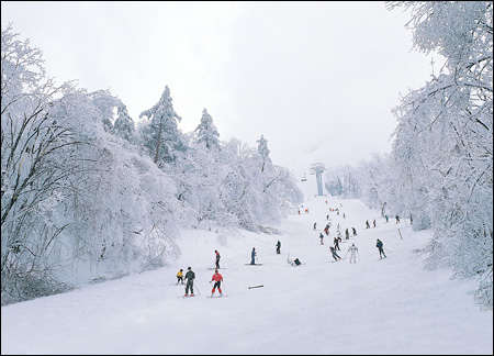 "Тур ""Фестиваль Ru-Ski + Сеул"". Паром"