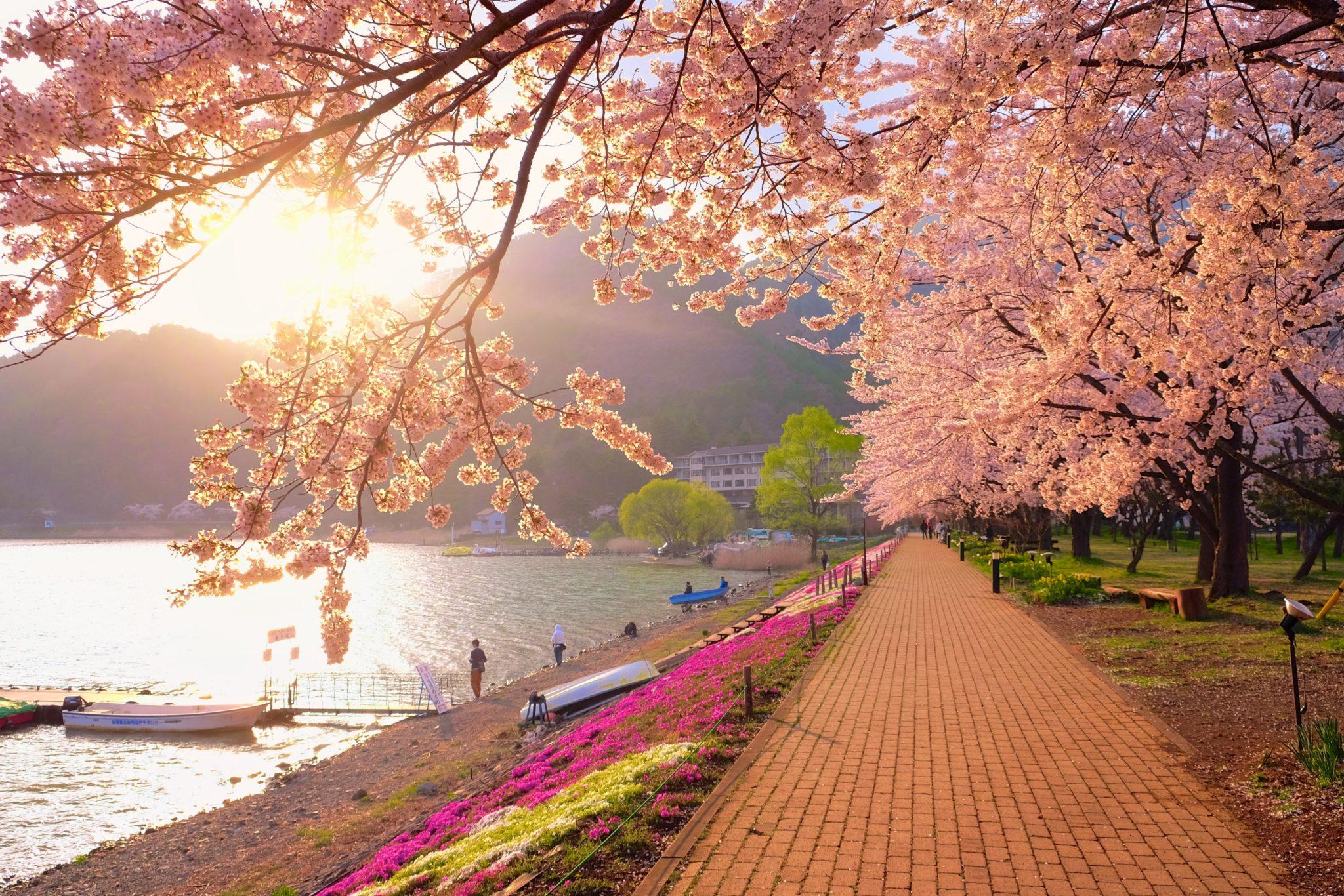 """Тур """"Большое путешествие по Японии. Цветение сакуры"""". Авиа"""