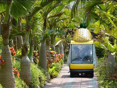 Наго парк ананасов